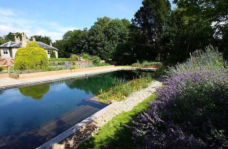 Duas piscinas numa só: atração de rãs, libélulas...